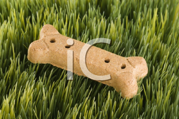 Royalty Free Photo of a Dog Treat on Grass