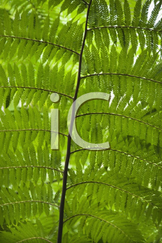 Royalty Free Photo of Fern Leaves, Australia