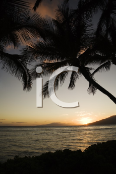 Royalty Free Photo of the Sunset Over Silhouetted Palm Trees