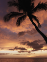 Royalty Free Photo of a Sunset and Palm Tree By the Pacific Ocean in Maui Hawaii