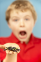 Royalty Free Photo of a Boy With a Spider
