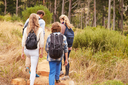 Family walking on a trail into a forest, back view