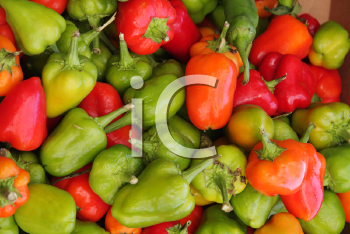 Royalty Free Photo of Red and Green Peppers