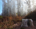 Royalty Free Photo of Morning Fog in a Forest in San Francisco