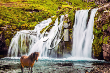 Summer in Iceland. Concept of exotic and extreme tourism. Horse grazing in the grass. At the foot of the mountain Kirkjoufell cascade falls Kirkjoufellfoss