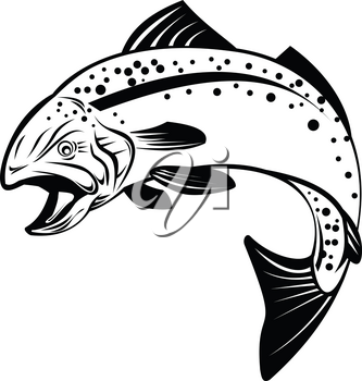 Retro style illustration of speckled trout, spotted seatrout, or Cynoscion nebulosus, a common estuarine fish jumping up on isolated black and white background.