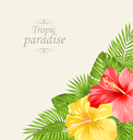 Illustration Vintage Greeting Card with Colorful Roses Mallow. Tropic Paradise Background - Vector