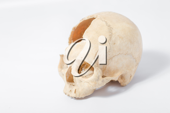 Side view of human skull on white