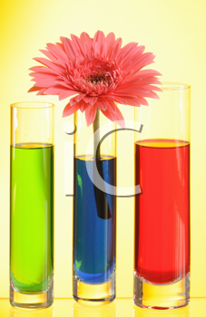Royalty Free Photo of a Flower in a Vase