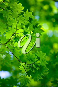 Royalty Free Photo of a Green Background