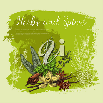 Herbs and spices vector poster. Culinary herbal seasonings of vanilla and cinnamon, cooking condiments peppermint and sage or bay leaf, peppermint and anise star seeds flavoring and rosemary dressing