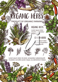 Organic spices, cooking flavoring herbs and herbal seasonings sketch. Vector culinary condiments nutmeg, vanilla or basil with sage, cinnamon or garlic and chili pepper, lemongrass and vanilla spice