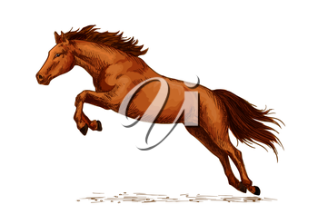 Jumping stallion or horse, equine sport sketch. Racehorse mustang or broodmare, purebred wild chestnut mare. Horsey or equestrian animal sport with jump over obstacles like oxer or cavaletti, sport cl