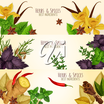 Spicy aromatic herbs, herbal seasonings and spice condiments vector banners of anise and oregano, basil, dill and parsley, ginger, cumin and chili pepper, rosemary and thyme, sage bay leaf, aromatic v