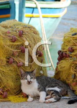 Royalty Free Photo of a Cat Curled Up Beside Fishing Nets