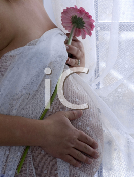 Royalty Free Photo of a Closeup of a Naked Pregnant Woman Covering in Sheer Drapes