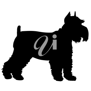 Royalty Free Clipart Image of a Silhouette of a Schnauzer