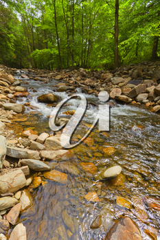 Beautiful view of the flowing forest creek.