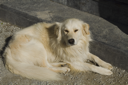 Close-up of a dog, Tralee, County Kerry, Republic of Ireland