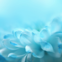 Soft focus flower background with copy space. Made with lensbaby and macrolens.