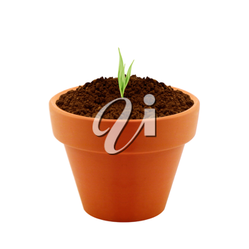 Young plant in clay pot isolated on white background.