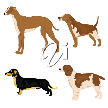 Royalty Free Photo of Four Dogs