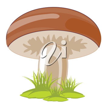 Edible mushroom in herb on white background is insulated