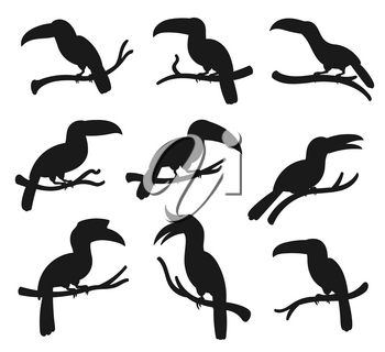 Exotic tropical birds, vector silhouette icons. Cartoon toucan and hornbill birds with big beaks sitting on tree branch, jungle birds and zoology park symbols