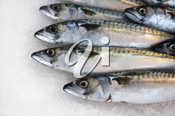 Mackerel on ice for sale at a French fish market.