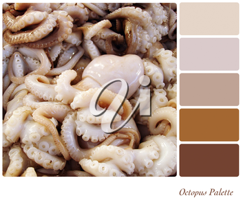 A background of fresh octopus in a colour palette with complimentary colour swatches.