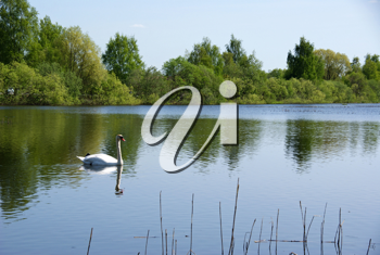 Royalty Free Photo of a Swan in the Middle of a Lake