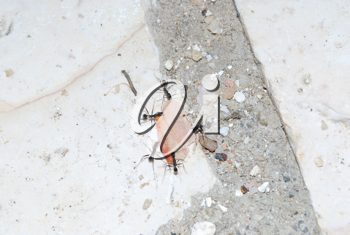 Royalty Free Photo of Ants Carrying Food