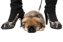 Royalty Free Photo of a Dog at a Woman's Feet