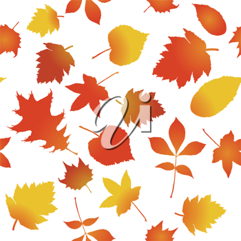 Royalty Free Clipart Image of Autumn Maple Leaves