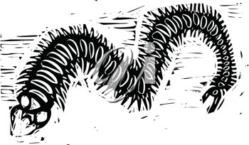 Royalty Free Clipart Image of a Centipede