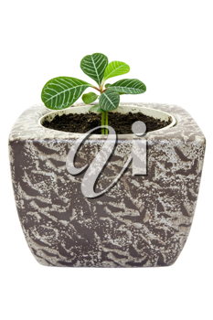 Royalty Free Photo of a Houseplant