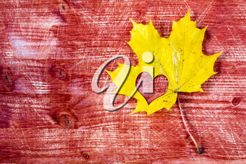Yellow maple leaf with heart shape on the red wooden background
