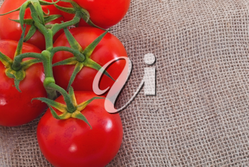 Bransch of tomatoes on sacking material