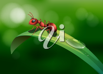 Illustration of an ant above the leaf
