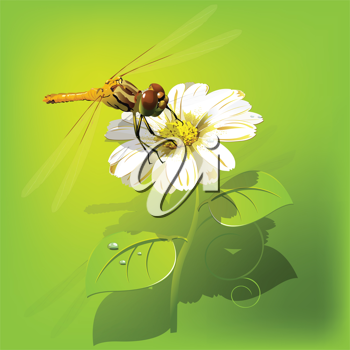 Royalty Free Clipart Image of a Dragonfly on a Flower