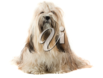 Royalty Free Photo of a Cute Dog Sitting