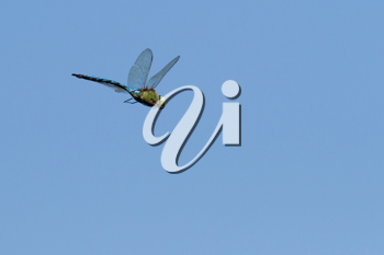 flying dragonfly on blue sky