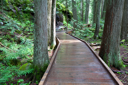 Royalty Free Photo of a Boardwalk in the Forest