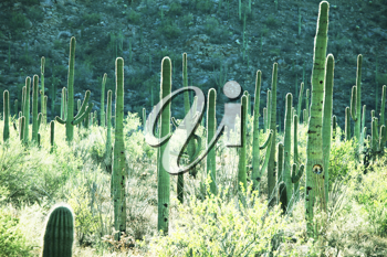 Royalty Free Photo of a Cactus Park