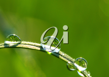 Royalty Free Photo of Dew Drops on Grass