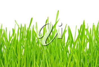 Royalty Free Photo of Green Grass