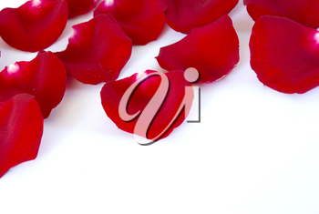 red petals isolated on a white background