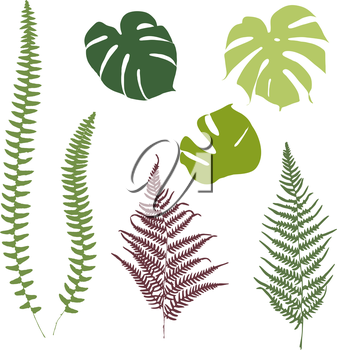 Fern and monstera silhouettes. Isolated on white background