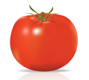 Royalty Free Clipart Image of a Tomato