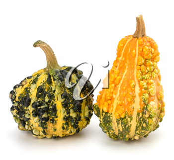 Decorative pumpkin isolated on white background. Halloween and harvest symbol.